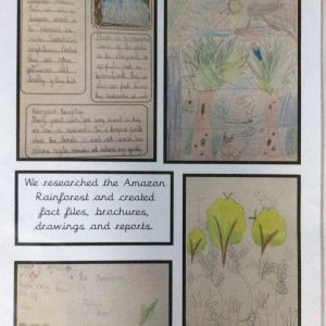 example work on the rainforest