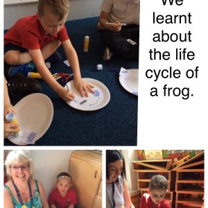 learning about the life cycle of a frog
