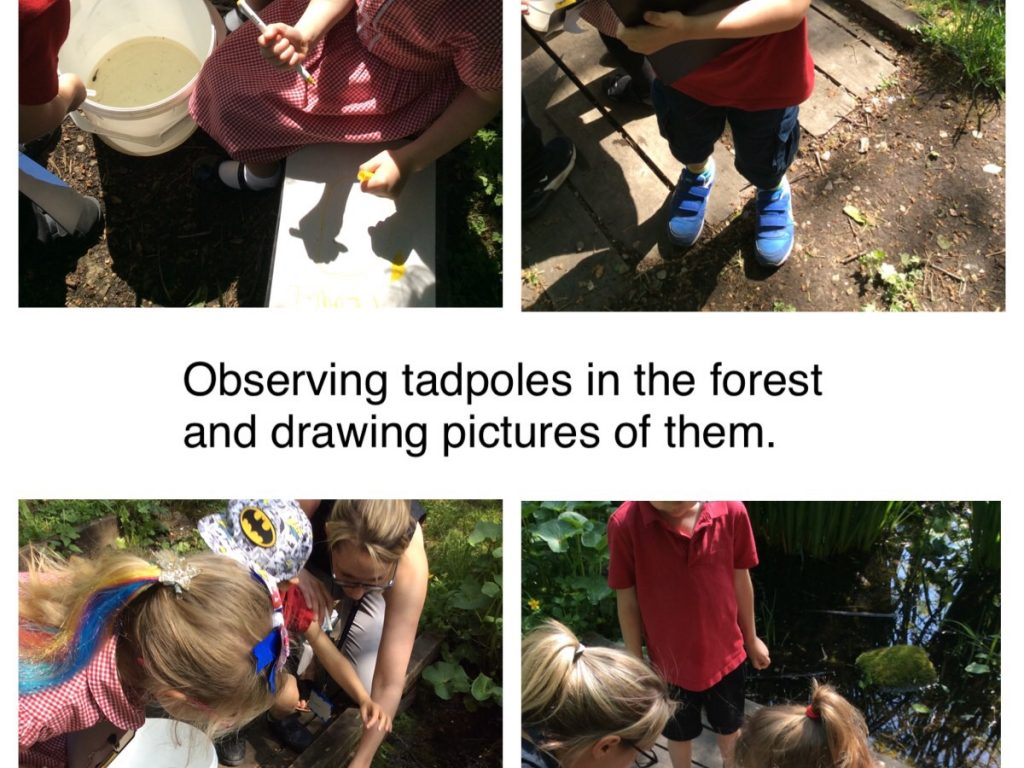 observing tadpoles in the forest